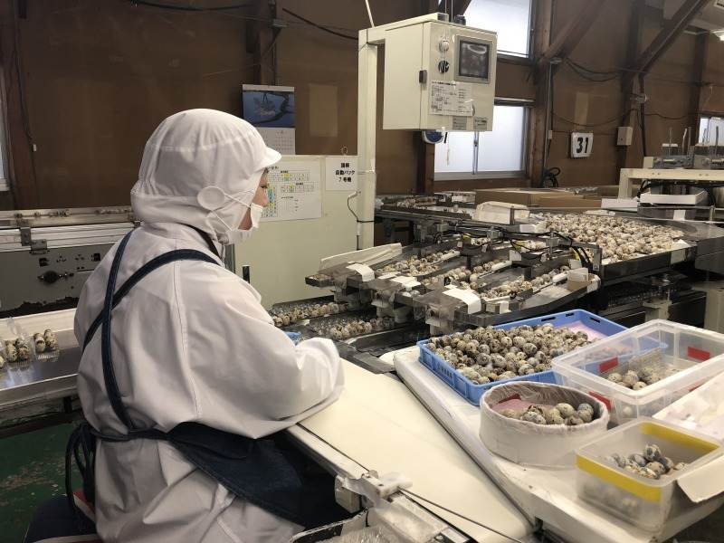 うずらの卵の製品の加工管理業務です